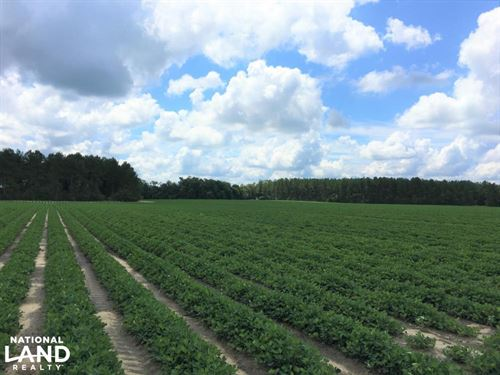 Blacks Drive Mini Farm Estate : Williston : Barnwell County : South Carolina
