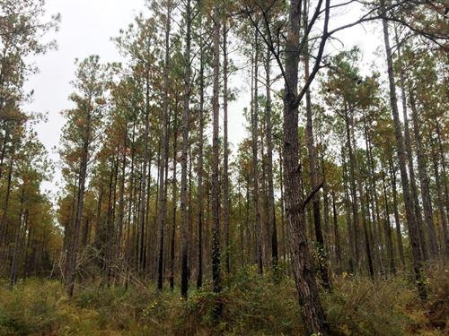 Ellis Creek Tract : Milton : Santa Rosa County : Florida