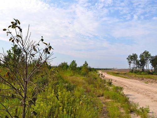 37 Acres Hamilton Road : Trevat : Trinity County : Texas