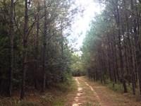 Pike Woodlands South : Troy : Pike County : Alabama