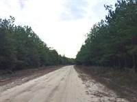 Pine Level Tract : Troy : Pike County : Alabama