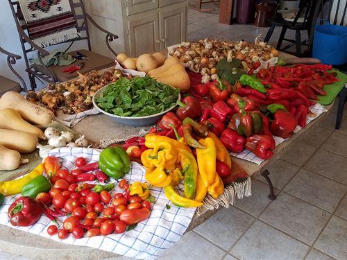 Texas Hill Country Organic Farm : Valley Spring : Llano County : Texas