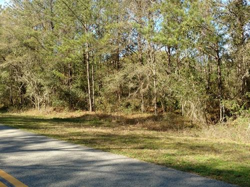 Historic 1 Acre On Preston Road : Brooksville : Hernando County : Florida
