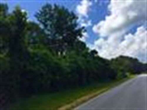 This 122 Ac Tract Loaded W/Timber : Natchez : Adams County : Mississippi