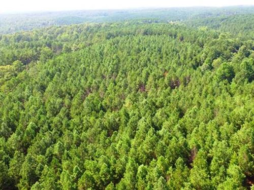 Hillsboro- Tract 5B : Hillsboro : Lawrence County : Alabama