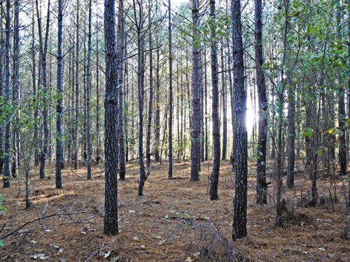Angel Tract 1 : Yemassee : Hampton County : South Carolina