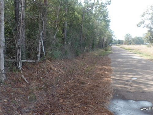 26.9 Ac, Timberland For Rural Home : Kirbyville : Jasper County : Texas
