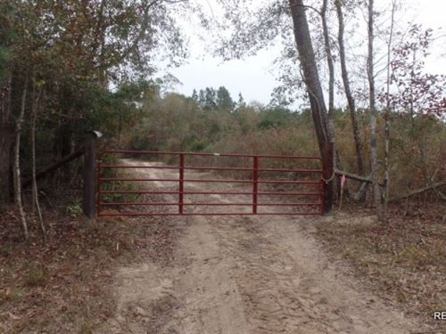 49.1 Ac - Wooded Tract For Home Sit : Kirbyville : Jasper County : Texas