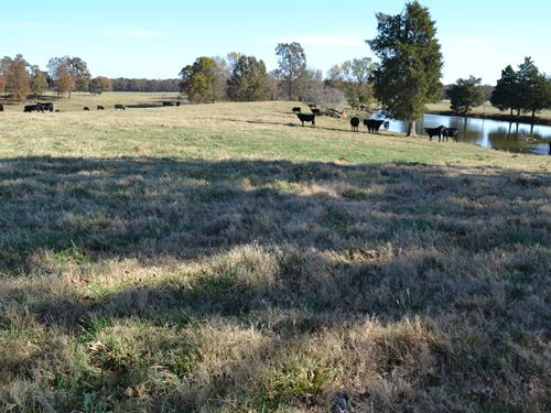 Cattle Farm With Custom Home : Newark : Independence County : Arkansas
