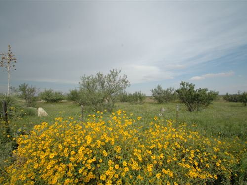 West Texas Land $138/Mo. $0 Down : Van Horn : Hudspeth County : Texas