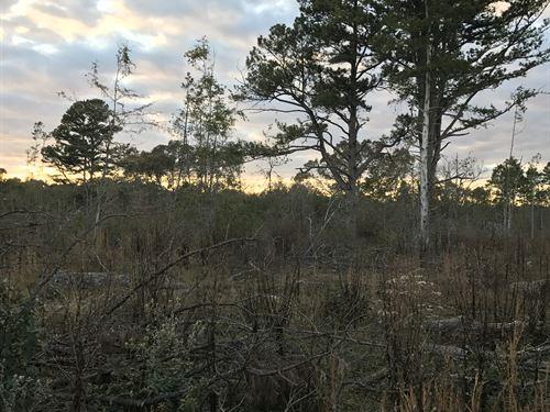 42.54 Hunting Land Or Farm : Strawberry : Sharp County : Arkansas
