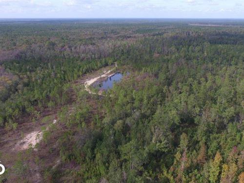 Buffalo Swamp Recreational Property : Darien : McIntosh County : Georgia