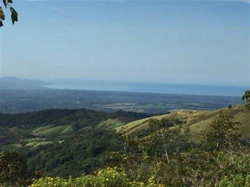 Costa Rica Coffee Farm And More : San Ramon : Costa Rica