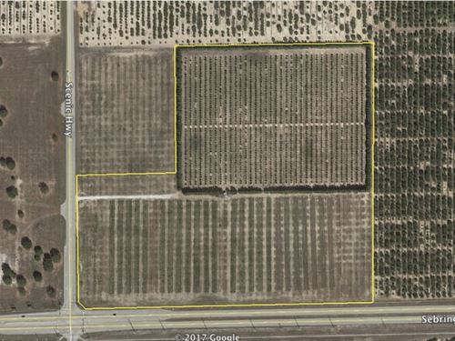 29.45 Acres In Sebring, Fl : Sebring : Highlands County : Florida