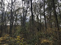 3.1 Ac On Bear Creek Road : Moreland : Coweta County : Georgia