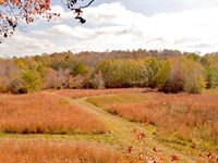 130 Acres Union Springs, Alabama : Union Springs : Bullock County : Alabama