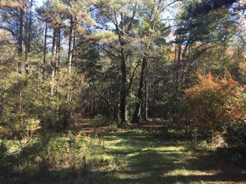 Homesite Or Camp Nice 13 Acres : Liberty : Amite County : Mississippi