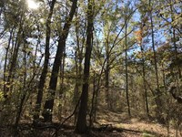 Titus Tract, Hardwoods & Hunting : Mount Pleasant : Titus County : Texas