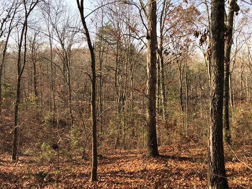 6.25 +/- Wooded Acres : Fairmount : Gordon County : Georgia