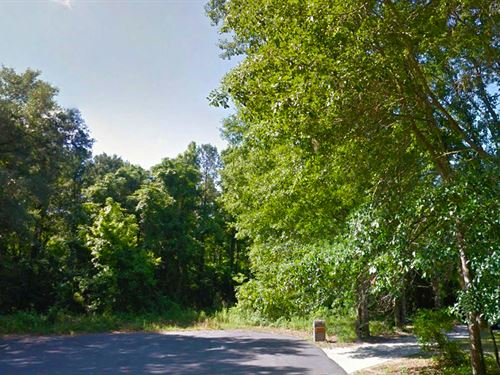 Beautiful Treed Lot In Tallahassee : Tallahassee : Leon County : Florida