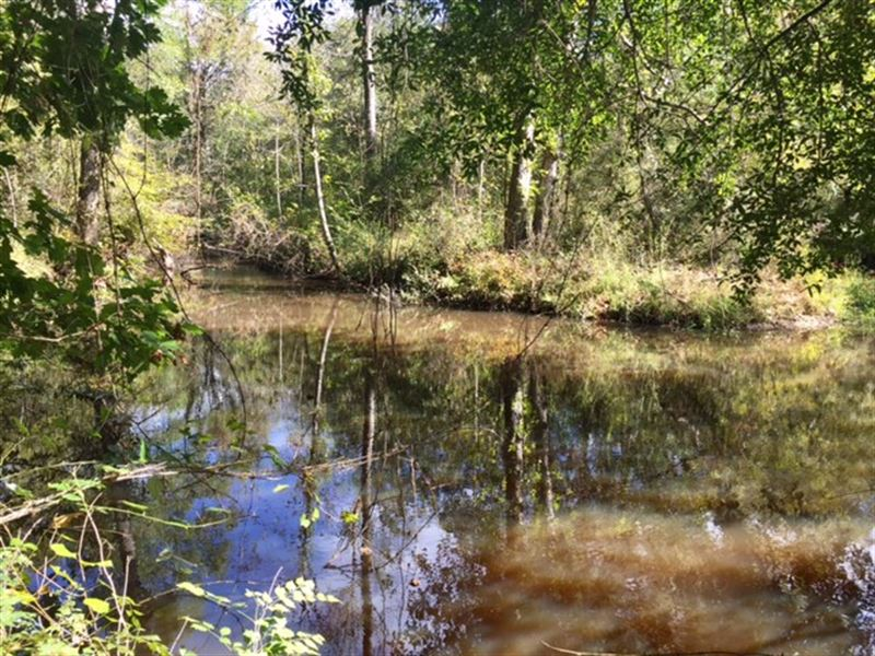 Ohoopee River Hardwoods : Tennille : Washington County : Georgia