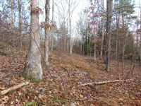 12 +/- Acre Wooded Building Lot : Shickshinny : Luzerne County : Pennsylvania