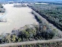 123 Acres of Timber And Farm Land : Glisson : Duplin County : North Carolina