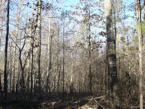 51.95 Acres : Flovilla : Butts County : Georgia