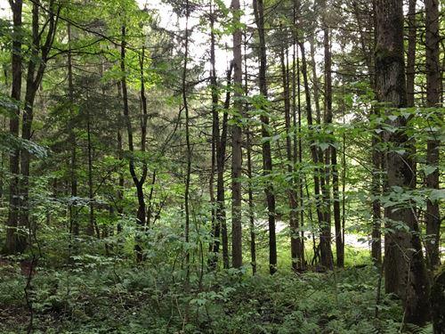 Sugar Maple Ridge : Redfield : Oswego County : New York