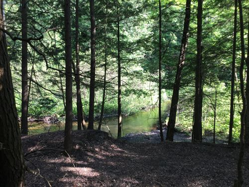 Trout Fishermans Camp Spot : Williamstown : New York County : New York