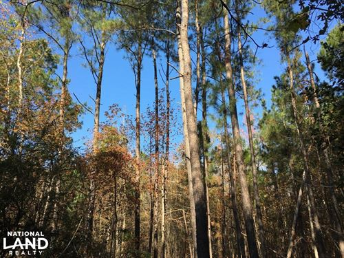 Denmark Timberland With Homesite : Denmark : Bamberg County : South Carolina