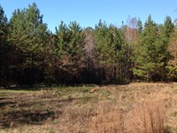 120 Acres In National Forest : Marion : Perry County : Alabama