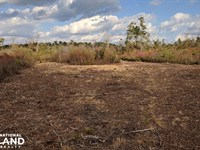 Holladay Recreational Hunting Land : Manning : Clarendon County : South Carolina