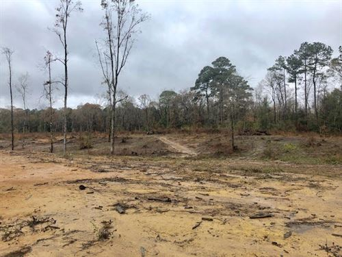 Hunter Alert This 16.9 Ac By Hnf : Gloster : Amite County : Mississippi