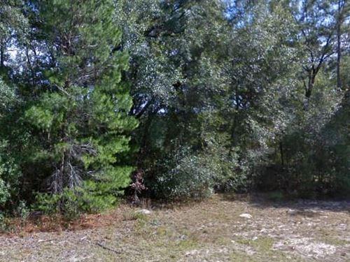 Marion County, Fl 29,000 Neg : Ocklawaha : Marion County : Florida