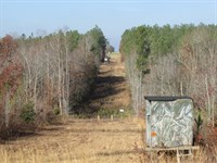 Carroll 143 Tract : Kershaw : Kershaw County : South Carolina