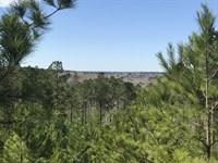 Saddleback : Cusseta : Chattahoochee County : Georgia