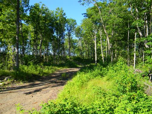 Drummond Lake Road : Covington : Baraga County : Michigan