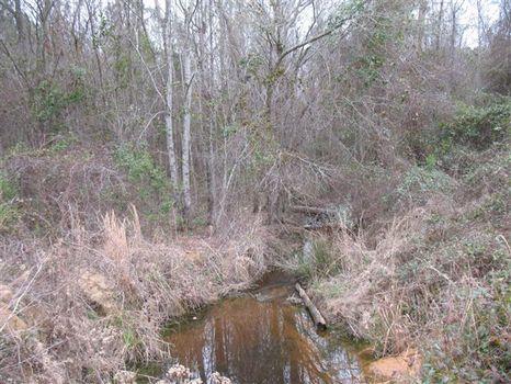 Wheeler Co. Tract : Alamo : Wheeler County : Georgia