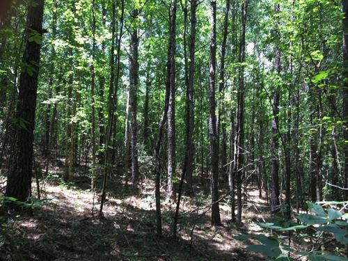 McGowan Tract : Guin : Marion County : Alabama