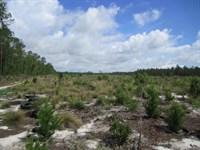 Fox Pen East 168 Acres : Hawthorne : Alachua County : Florida