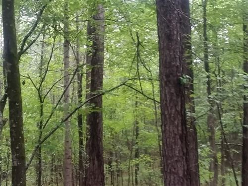 Mt. Carmel Tract -1 : Mount Carmel : McCormick County : South Carolina