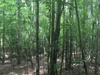 Halawaka Woods : Opelika : Lee County : Alabama