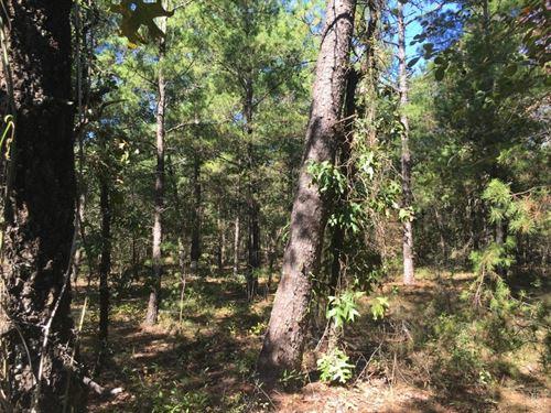 Evans 29.86 : Vernon : Washington County : Florida