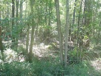 Brewington : Manning : Clarendon County : South Carolina