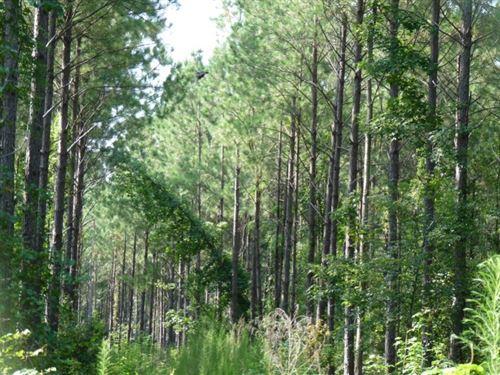 Lutes : Eutawville : Orangeburg County : South Carolina