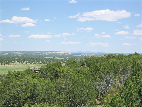 Deep Wilderness Arizona Ranch : Saint Johns : Apache County : Arizona