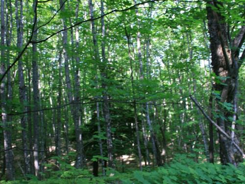 Huron Timbers Hideaway -Entire : Marquette : Michigan