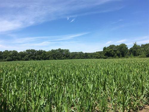 221 Acres in Mount Pleasant, FL : Mount Pleasant : Gadsden County : Florida