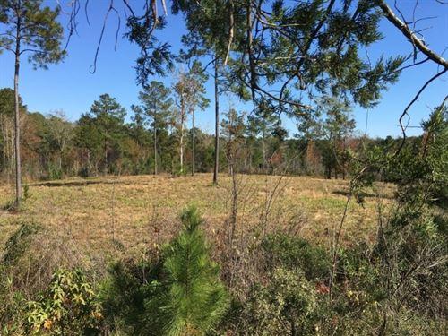 Perch Pond Road : Wausau : Washington County : Florida